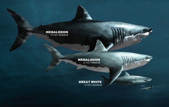 Megalon-Great White